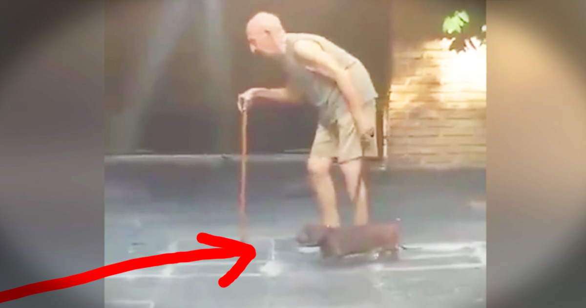 Loyal Dog's Slow Walk With His Elderly Human Will Warm Your Heart