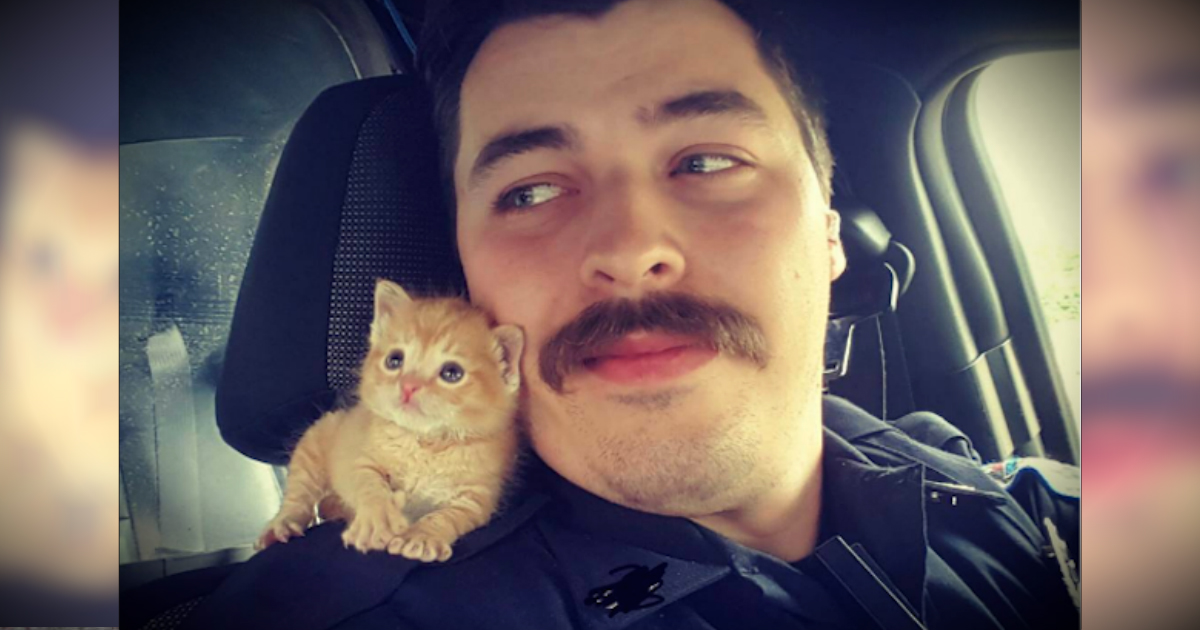 Abandoned Kitten Rescued By Cop Makes For Cutest Partner