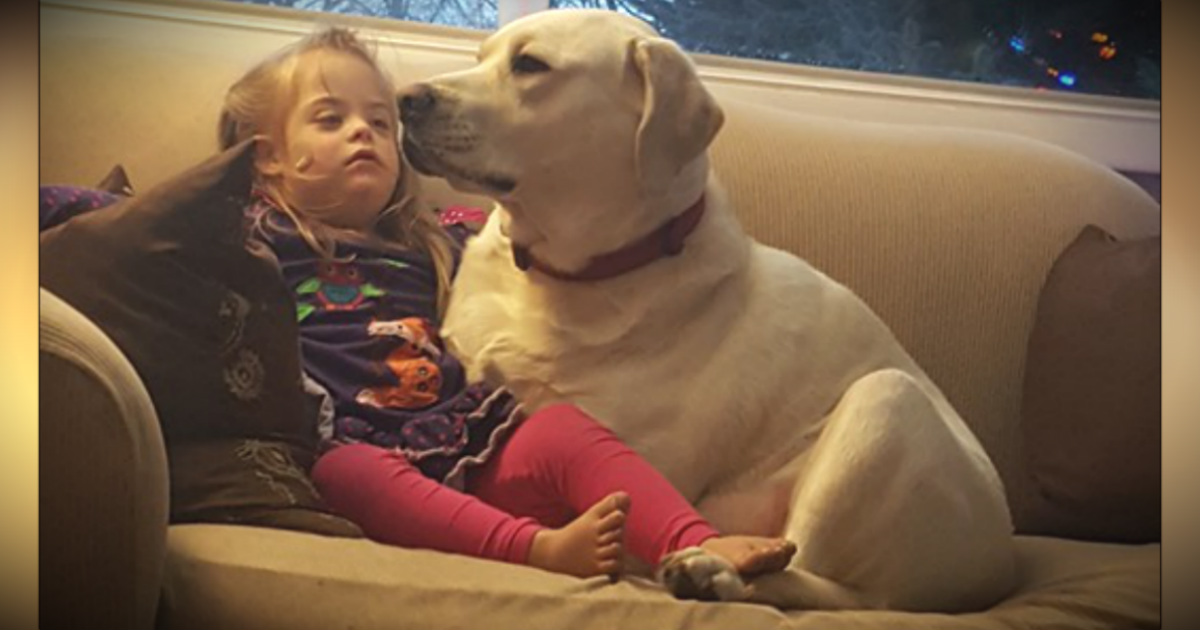 Diabetic Alert Dog Saves 4-Year-Old Girl From 5 Miles Away