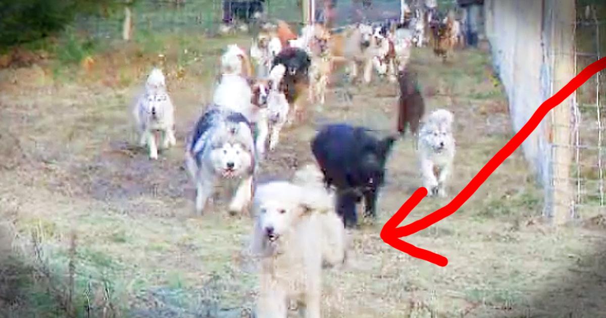 news weird meet rescue dogs trust