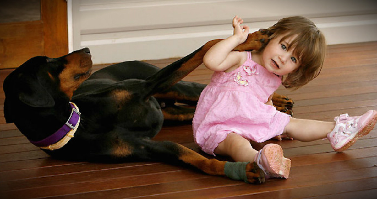 Rescued Doberman Saves Little Girl From A Snake - Heartwarming!
