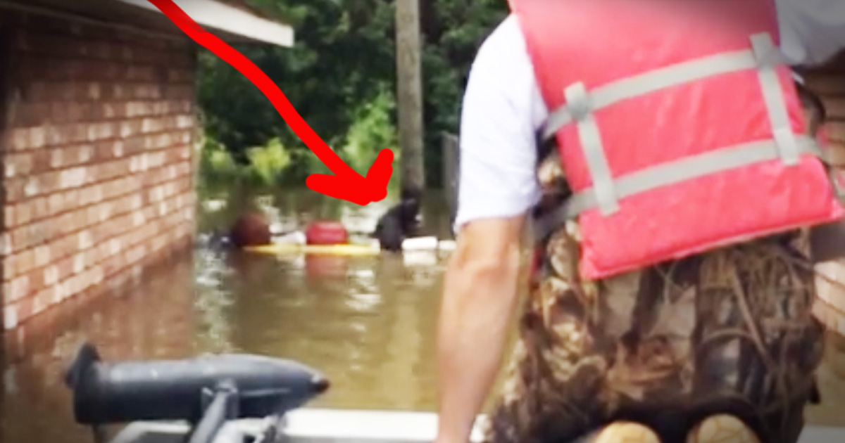 Rescuers Travel The Streets After A Horrific Flood Rescuing Stranded Dogs