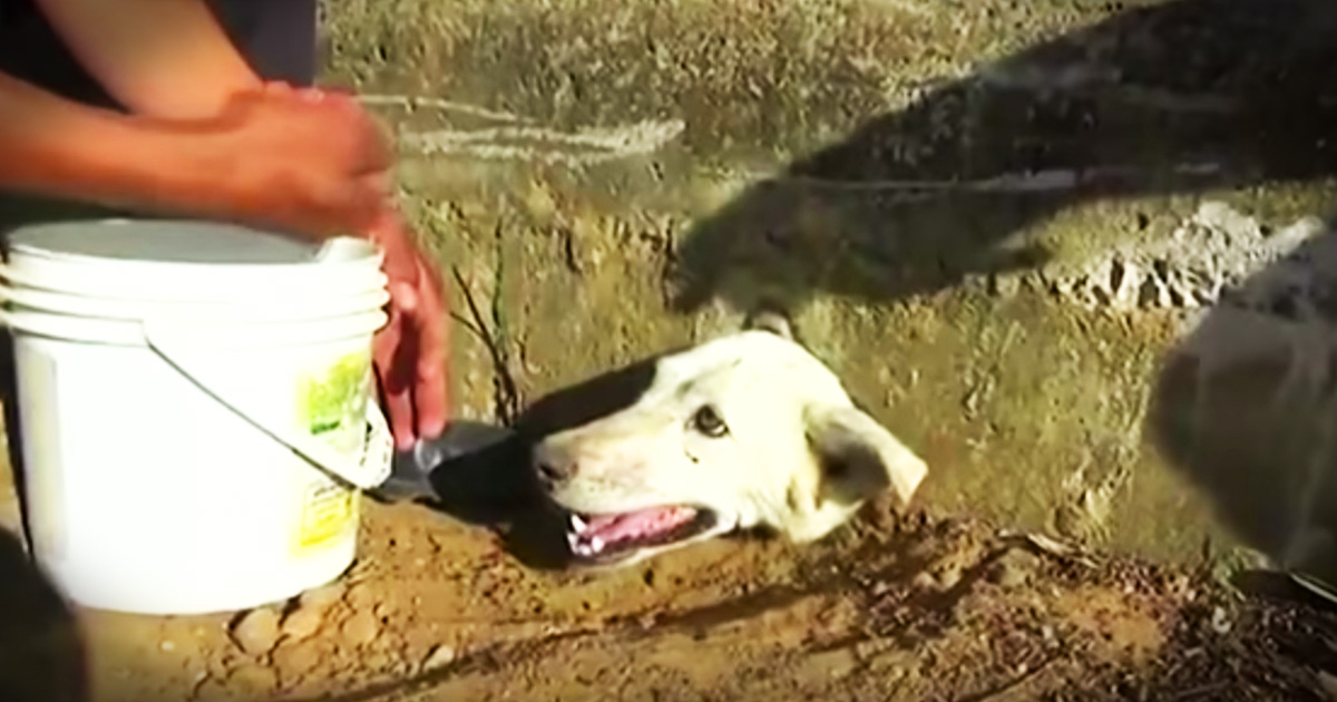 dog with head stuck in a wall gets rescued - Animals Video