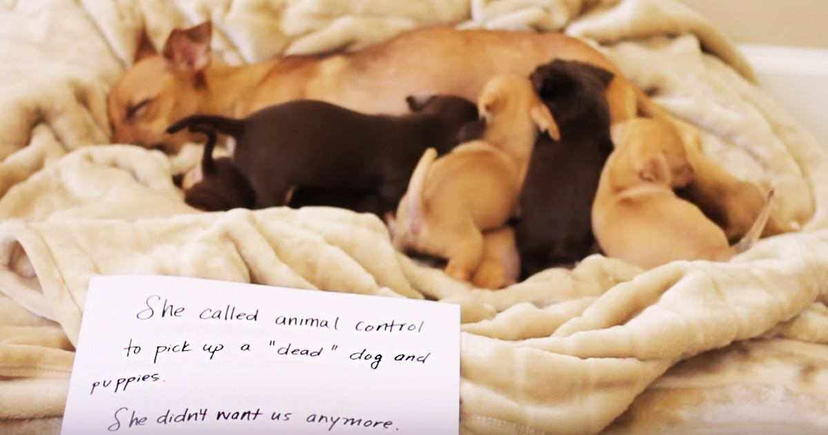 Dog's Cardboard Testimony Will Move You To Tears