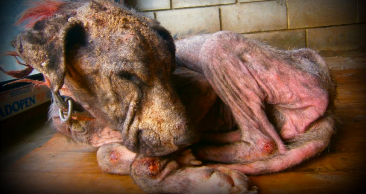 Neglected Dog Thrown From A Truck: Rosalie's Miraculous Recovery