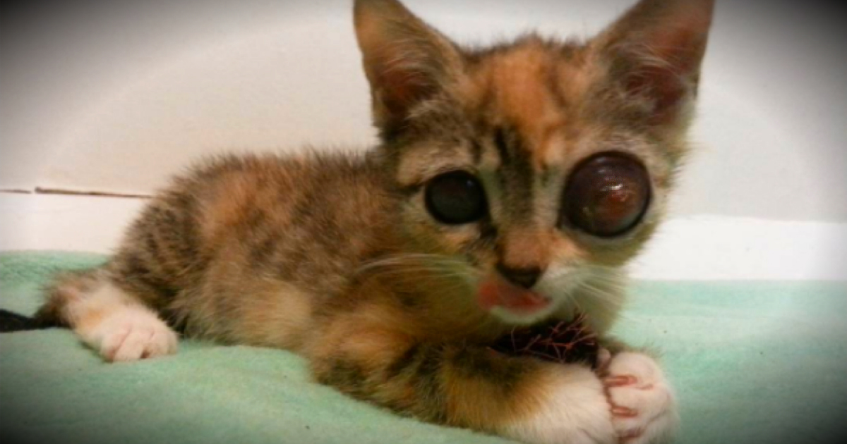 Stray Kitten With Frog-Like Eyes Fights For Life & Gets A Loving Home