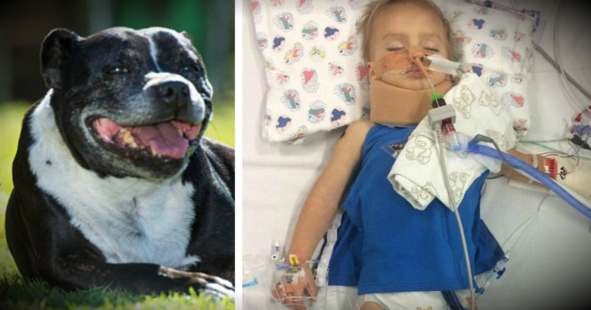 Family Dog Led Dad To 2-Year-Old Son Face-Down, Unconscious In Water