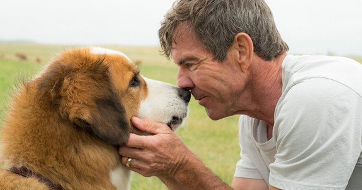 New Movie 'A Dog's Purpose' Is Hitting All The Heartstrings