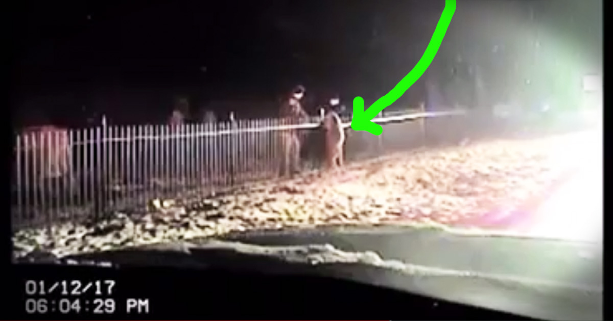 Cops Work Together To Rescue Deer Trapped In A Fence