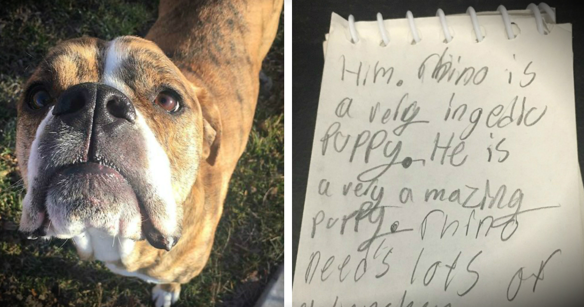 Rescue Dog Returned To Shelter With Heartbreaking Letter Attached
