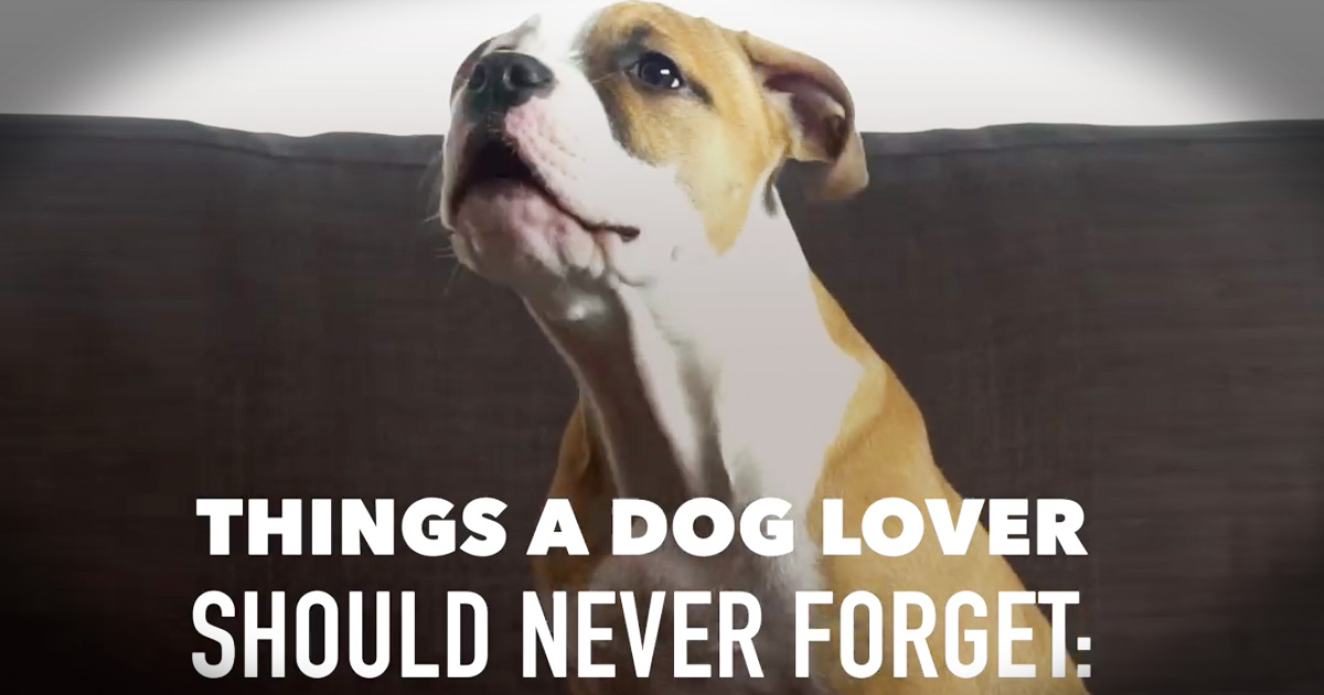 Emotional List Of The Things Your Dog Would Say To If They Could Talk