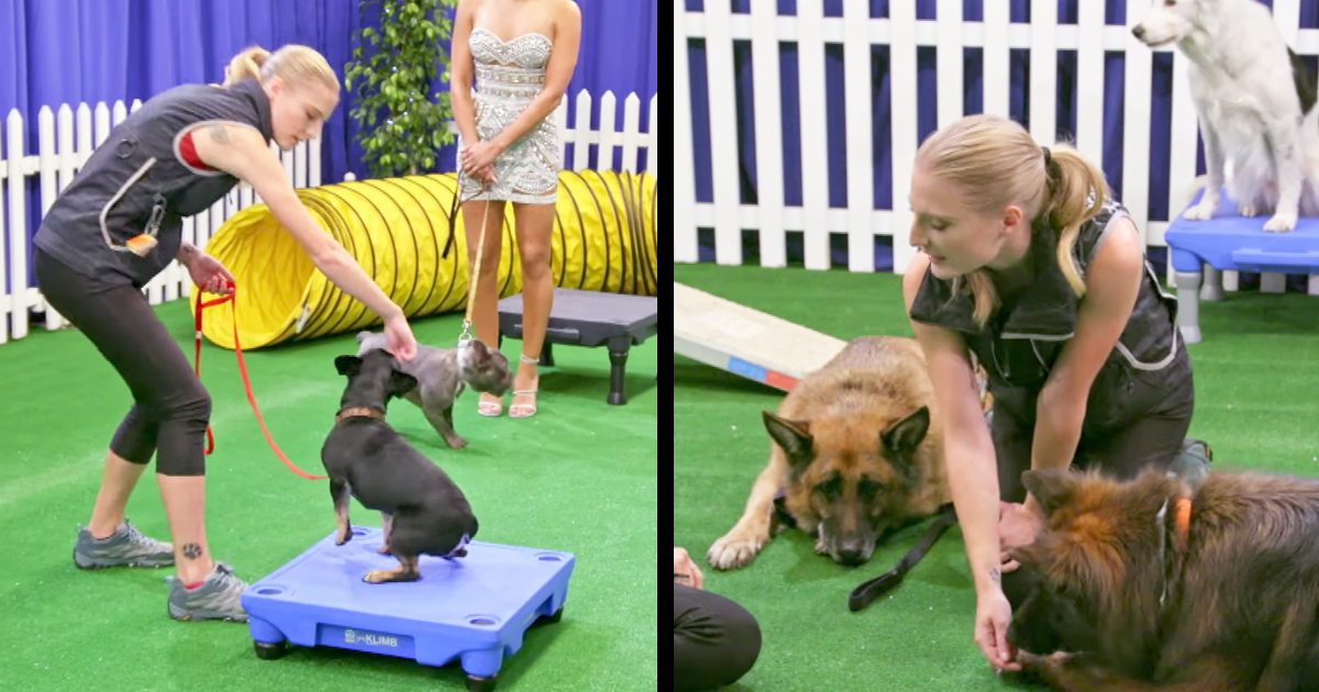 Talented Dog Traner's Hilariously Attempts To Train Judges Dogs
