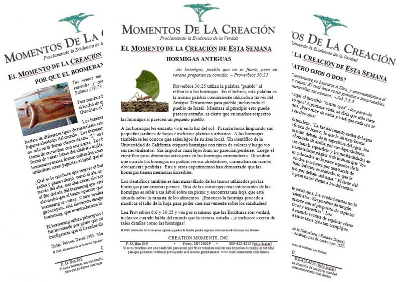 De La Creacion. Paginas Para Colorear Para La Creacion S La Bullet ...